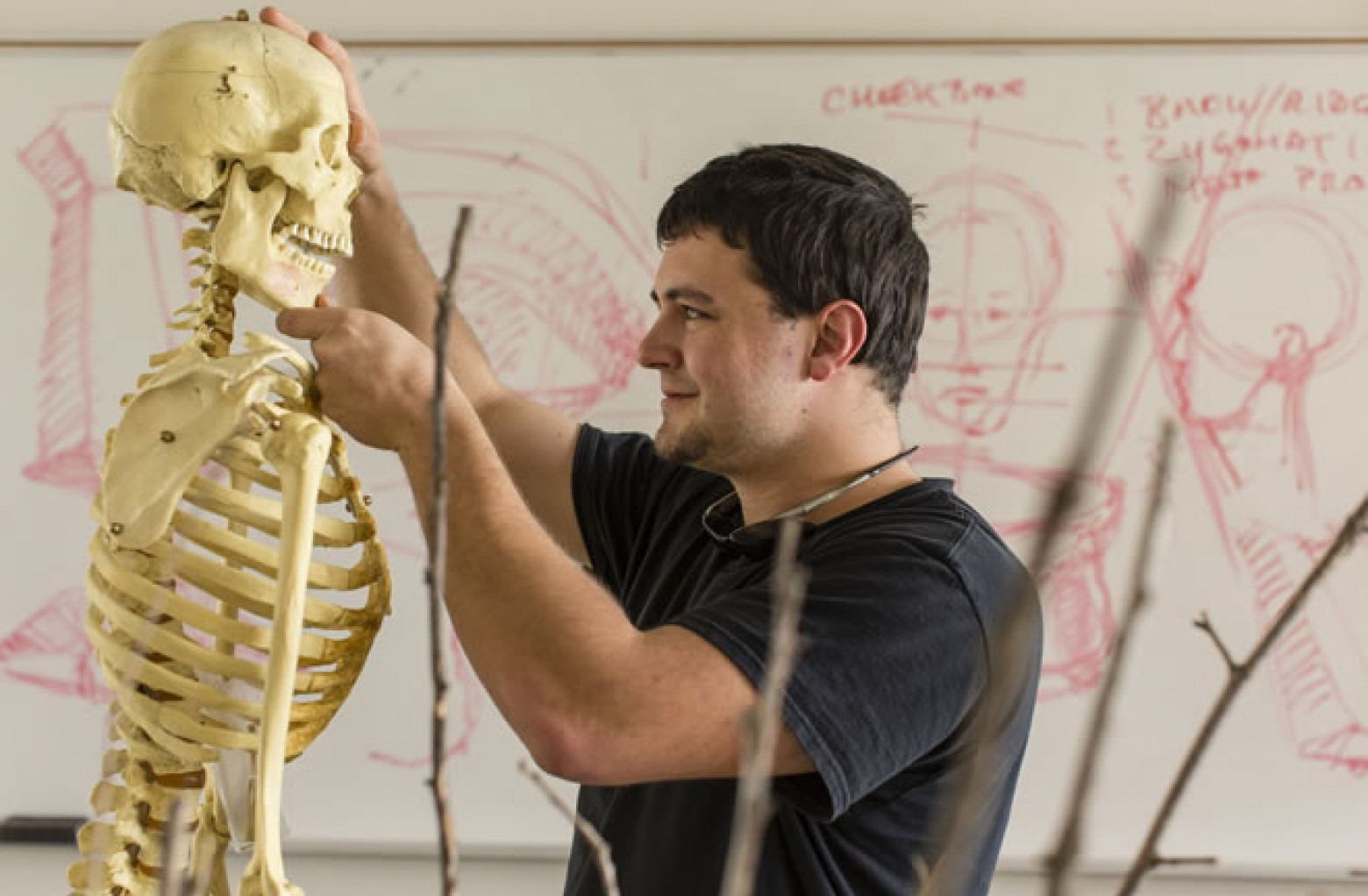 Male student observing human skeleton in figure drawing class